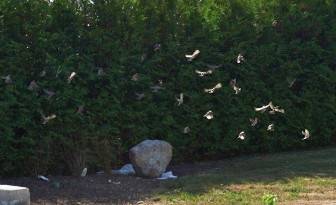 sandbadande fåglar